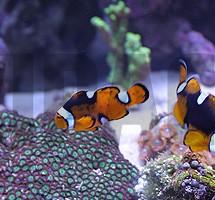 Akwaria i ryby